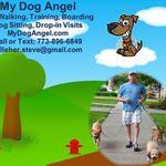 My Dog Angel profile image.