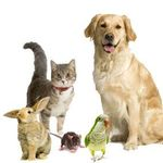 Aptos-Creekside Pet Hospital profile image.