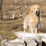 Cudahy Kennel Club profile image.