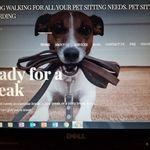 Amy's Dog Walking profile image.