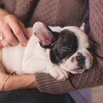 Pet Nanny Home or Away profile image.