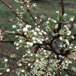 EatWell Natural Farm profile image.