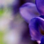 Otown Flowers profile image.