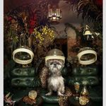 The Dogroom - Grooming room Dog Grooming profile image.