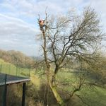 Owens Tree & Garden Services profile image.