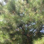 Pine lands arbor culture solutions profile image.