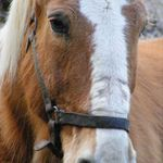 CowgirlVickie Photography profile image.