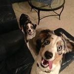 Pawsitive Love Pet Care profile image.
