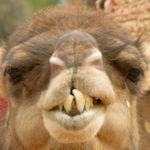 Moroccan Sahara Tours profile image.
