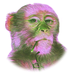 Eccentric Monkey Digital Marketing Services profile image.
