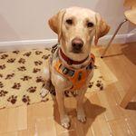 Theo Stewart, The Dog Lady profile image.