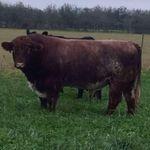 Bramblebee Farms profile image.