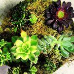 West Hollywood Florist profile image.