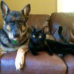 Luna Bear Pet Care profile image.