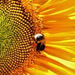 Sunnyside Travels profile image.