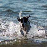 Wagtastic woofers Bideford  profile image.