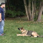 Alpha Obedience Dog Training profile image.