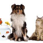 Dacorum Dog Walking & Pet Services profile image.