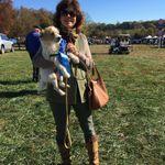 Woodside dog training,boarding and grooming profile image.