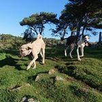 Happy Hound Hikes profile image.