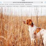 Birddog Supreme profile image.