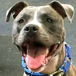 Best Behaved Dogs LLC profile image.