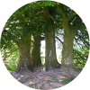 Druantia Shamanic Healing profile image