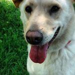 The Humane Society of Greater Kansas City profile image.