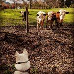 The SHdogcompany profile image.
