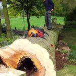 Cumbria Tree Surgeons profile image.
