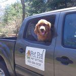 Pet Pal Pet Sitting profile image.