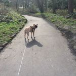 Rain or Shine Dog Walking & Pet Sitting Service profile image.