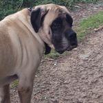 George's Walkies profile image.