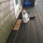 Purrfect Pet Care profile image.