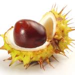 Chestnut Financial Services Ltd profile image.