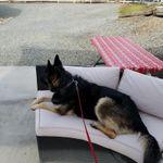 K9 Companions Dog Training profile image.
