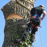 A Hupton Tree Surgeon profile image.