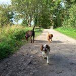 Happy Trails profile image.
