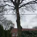 SL landscapes and tree  services profile image.
