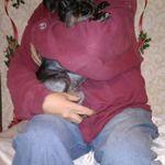 Parkview pet service  profile image.