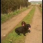 Taking the lead dog walking services profile image.