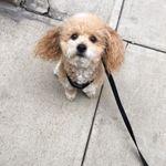 Dog Walk NYC profile image.