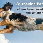 Lindenhurst Animal Hospital profile image.