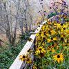 InsideOut Garden Design profile image