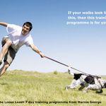 Canine Relationship Coaching profile image.