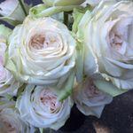 Garden Designs by Kristen profile image.