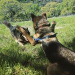 Diablo Dog Walking and Training profile image.