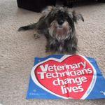 Piersdorf's Pawsitive Pups, LLC profile image.