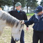 Building Bridges Foundation - Equine Assisted Therapy for Veterans profile image.
