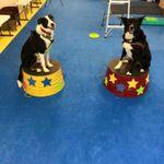 Trick Dog U K9 Training Academy profile image.